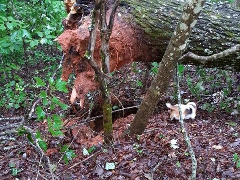 Tree Down 8-14-19