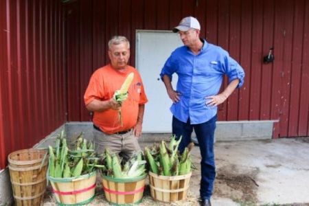 Paul Seabolt and Rep.Collins shuck corn at Seabolt Farms