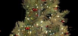 Freedom Park Christmas Tree Lighting Held