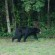 Bear Sighting In Cleveland Thursday
