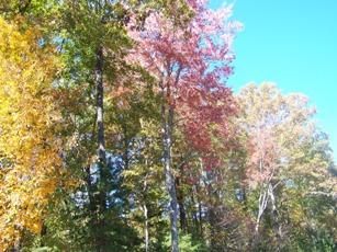 Fall Color Peak Near
