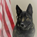 White County K-9 To Receive Protective Vest
